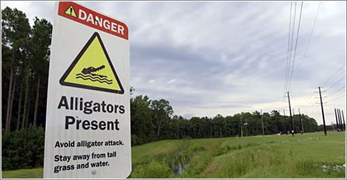 aligatores